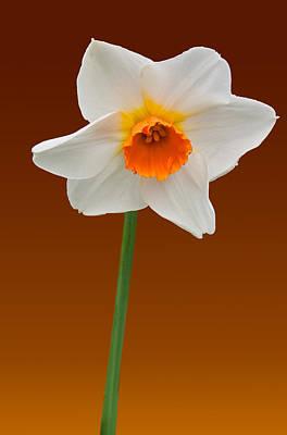 Flower Photograph - Spring Bulb by Matthew Bamberg