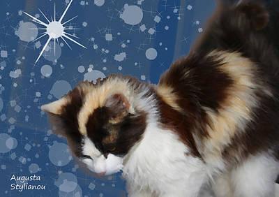Soulful Eyes Digital Art - Starry Cat by Augusta Stylianou