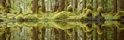 Swamp Print by David Nunuk