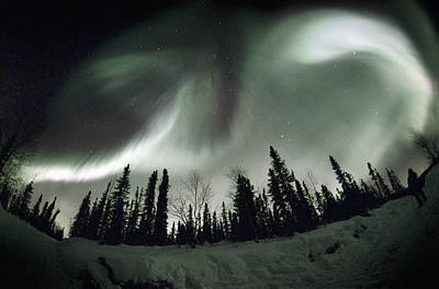 Observer Photograph - Aurora Borealis by Chris Madeley