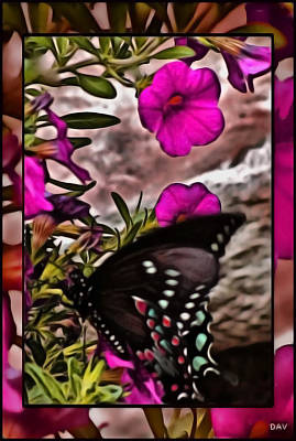 Butterfly Collection Print by Debra     Vatalaro