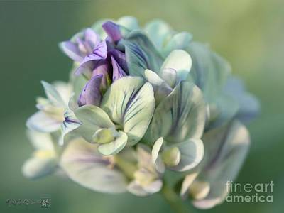 Mccombie Photograph - Alfalfa In Shades Of White by J McCombie