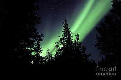 Yellowknife Photograph - Aurora Borealis Above The Trees by Jiri Hermann