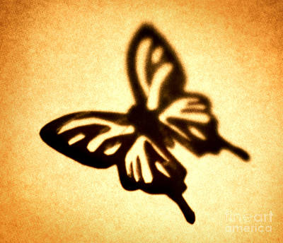Brown Toned Photograph - Butterfly by Tony Cordoza
