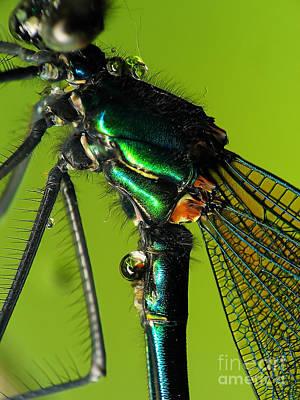 Dragonfly In Drops Print by Odon Czintos