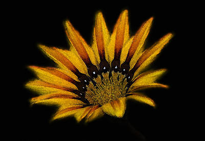 Photograph - Flower Head  by Cliff  Norton