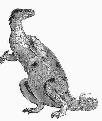 Iguanodon, Mesozoic Dinosaur Print by Science Source