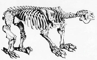 Megatherium, Extinct Ground Sloth Print by Science Source