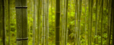 Bamboo Forest Photograph - Mystical Bamboo by Sebastian Musial