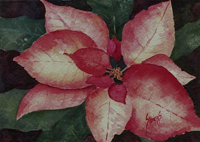 Poinsettia Painting - Poinsettia by Sam Sidders