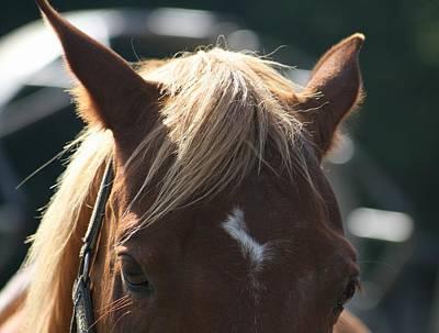 Horse Farm Maryland Photograph - The Beauty Of The Horses by Valia Bradshaw
