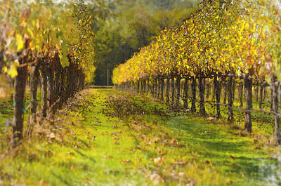 Vineyard Print by Brandon Bourdages