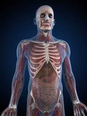 Male Anatomy, Artwork Print by Sciepro