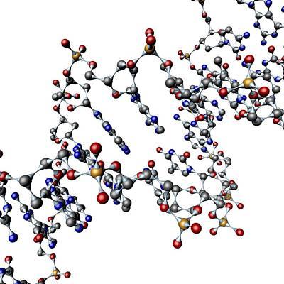 Dna Molecule, Artwork Print by Pasieka