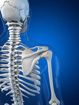 X-ray Image Digital Art - Upper Body Bones, Artwork by Sciepro