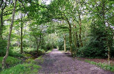 3d Woodland Original by John Chatterley