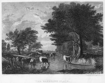 Hudson River School Photograph - Cattle, 19th Century by Granger