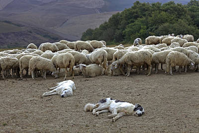 Flock Of Sheep Print by Joana Kruse