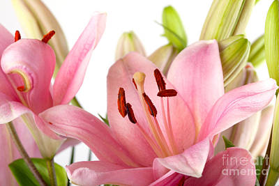 Pink Lilies Print by Nailia Schwarz