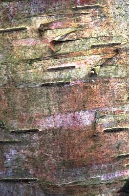 Framed Abstract Photograph - Tree Bark by John Foxx