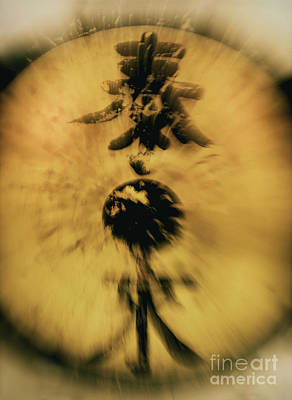 Gong Photograph - Untitled by Glennis Siverson