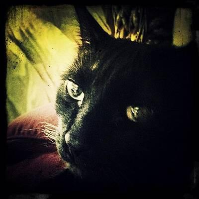 Cats Photograph - Booboo by Natasha Marco