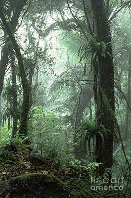 Tropical Rainforest Digital Art - El Yunque National Forest by Thomas R Fletcher