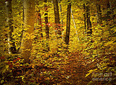 Birch Photograph - Fall Forest by Elena Elisseeva