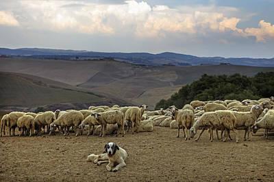 Cattle Dog Photograph - Flock Of Sheep by Joana Kruse