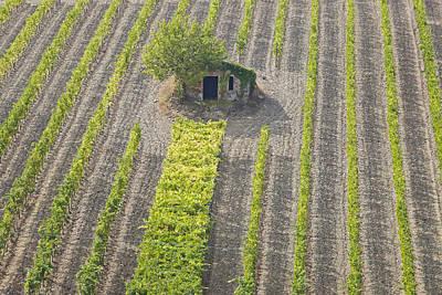 Harvest Time Photograph - Tuscany by Joana Kruse