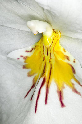 Floral Photograph - Exotic Orchids Of C Ribet by C Ribet