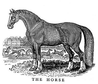 Horse Print by Granger