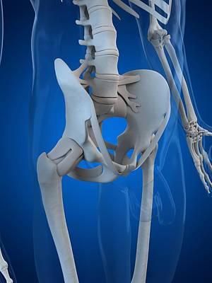 X-ray Image Digital Art - Pelvis Bones, Artwork by Sciepro