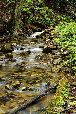 Rushing Mountain Stream Print by Thomas R Fletcher
