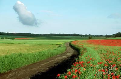 Abundance Photograph - Field Of Poppies. by Bernard Jaubert