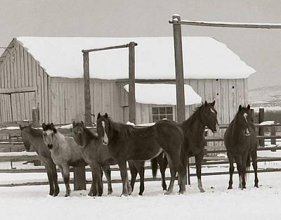 71 Ranch Print by Diane Bohna