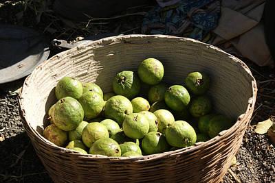 A Basket Full Of Guavas Just Outside Bhopal Print by Ashish Agarwal