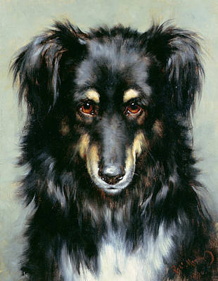 A Black And Tan Collie Print by Robert Morley