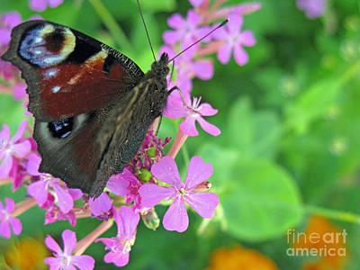 A Butterfly On The Pink Flower 2 Print by Ausra Huntington nee Paulauskaite