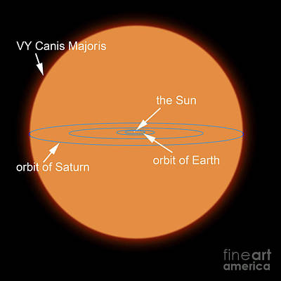 Rendition Digital Art - A Diagram Comparing The Sun To Vy Canis by Ron Miller