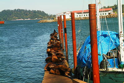 A Dock Of Sea Lions Print by Jeff Swan