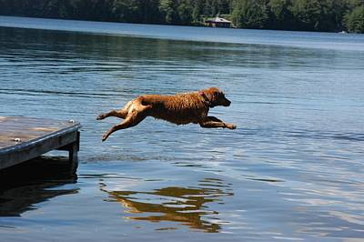 A Dog Jumps Into A Lake Chasing A Ball Print by Stacy Gold