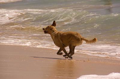 Hawaii Dog Photograph - A Dog Runs On The Beach by Stacy Gold