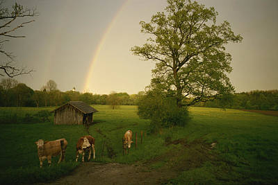 A Double Rainbow Arcs Over A Field Print by Carsten Peter
