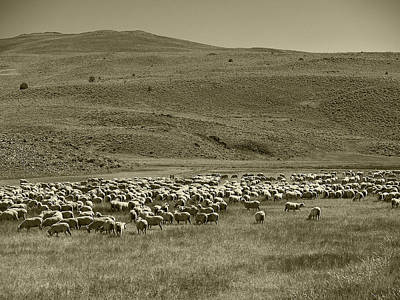 A Flock Of Sheep 4 Print by Philip Tolok
