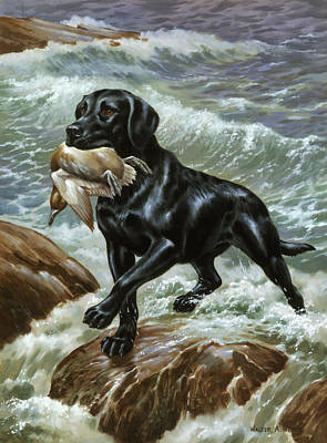 A Labrador Retriever Climbs From Surf Print by Walter A. Weber