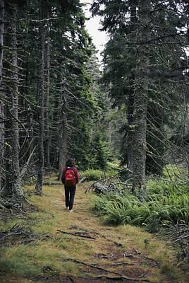 A Lone Hiker Enjoys A Wooded Trail Print by Tim Laman