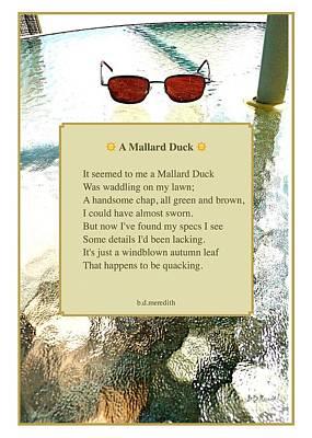 A Mallard Duck Print by Brian D Meredith