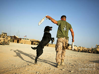 A Military Working Dog Handler Conducts Print by Stocktrek Images