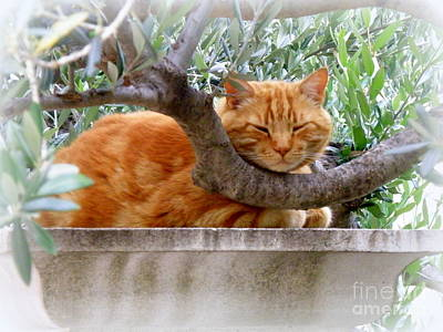 A Nice Napping Spot Print by Lainie Wrightson